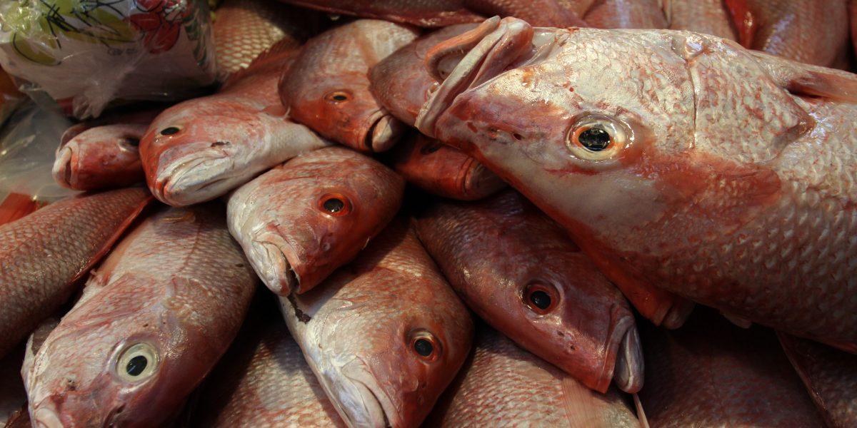 Consumir mariscos podría evitar depresión y enfermedades del corazón