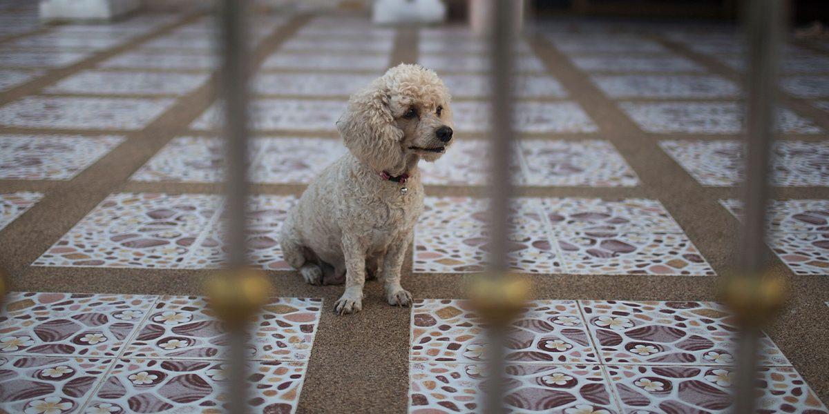 Prohiben comer carne de perro y gato en Taiwán, hasta 2 años de prisión
