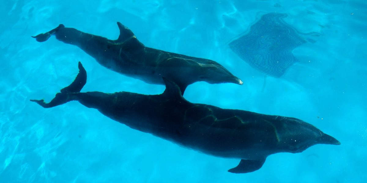 Llaman a frenar iniciativa para cerrar delfinarios