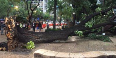 Cae árbol sobre Reforma; hay un lesionado