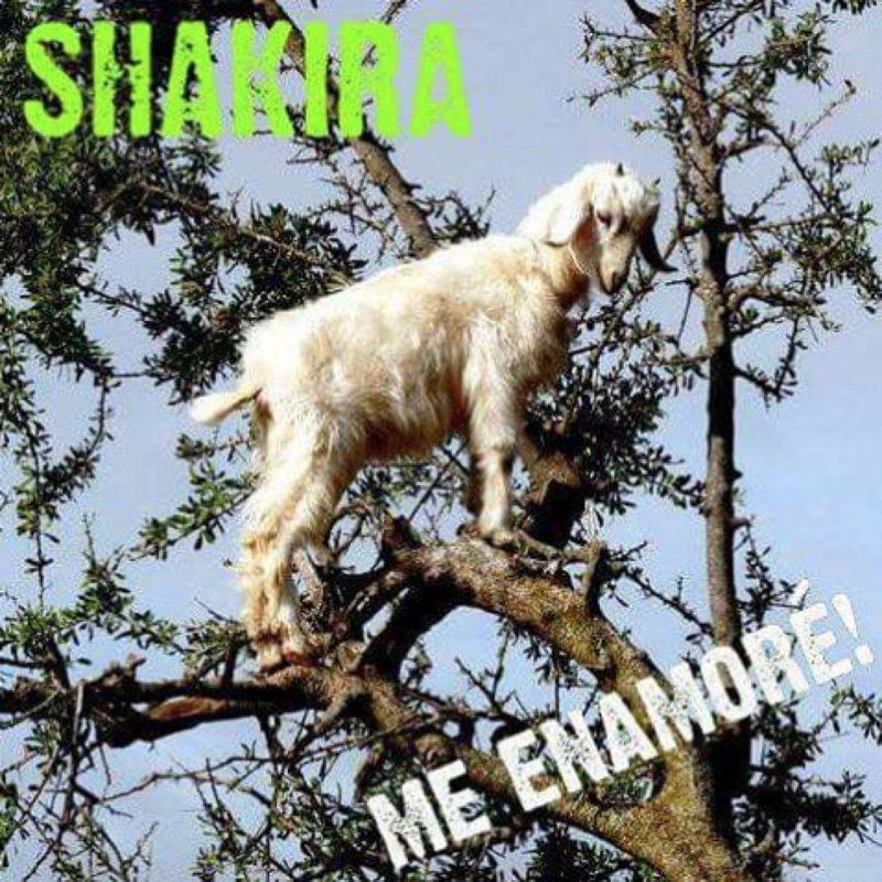 Shakira-meme-4