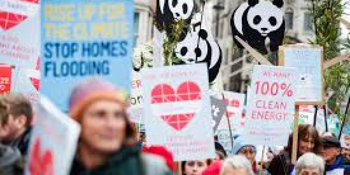 12 organizaciones que protegen el bienestar de la Tierra