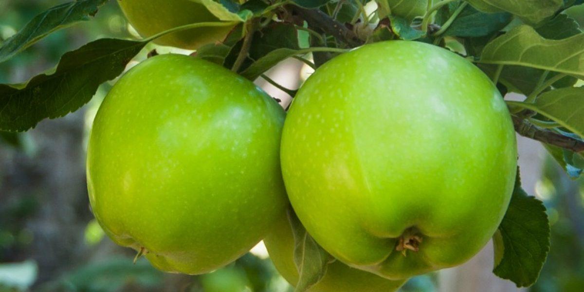 La manzana, gran aliada para combatir la obesidad infantil