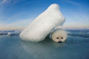 . Imagen Por: Foto: Instagram National Geographic