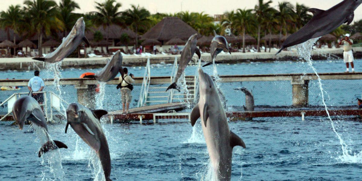 #Confidencial: Frenan iniciativa para prohibir delfinarios