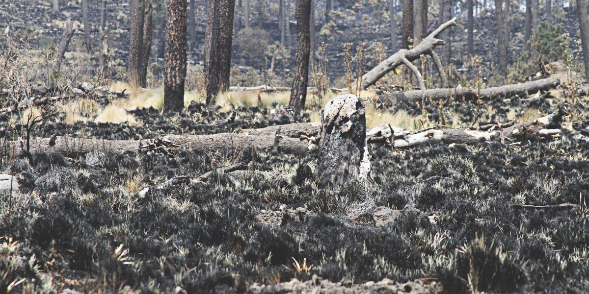 Aumentan 290% los incendios forestales en Milpa Alta