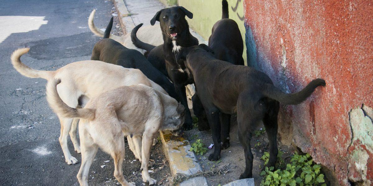 Urge diseñar plan para reducir perros callejeros en la Ciudad de México