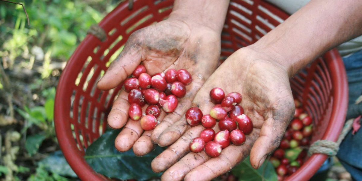 20 productos mexicanos lideran consumo mundial de alimentos