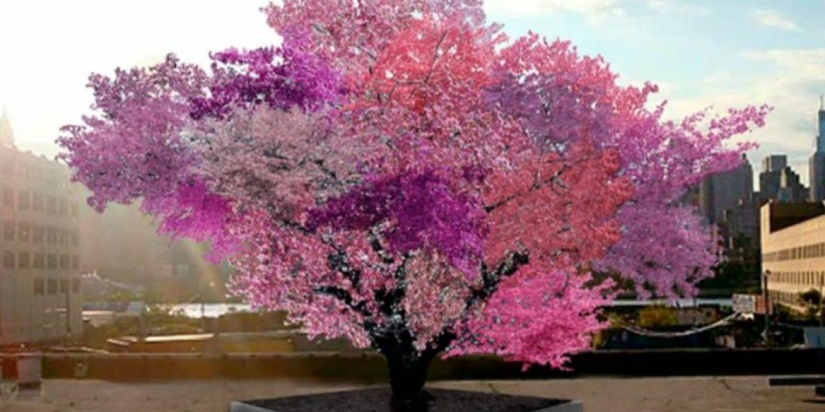 Árbol da 40 frutos diferentes