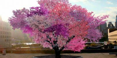 Foto:Treeof40fruit.com. Imagen Por: