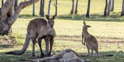 Esta escena se hizo viral. Pasó en Queensland, Australia. Foto:vía Ewan Switzer. Imagen Por: