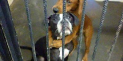 La foto de estas dos perritas abrazadas antes de ser sacrificadas también se hizo viral. Foto:vía Facebook. Imagen Por: