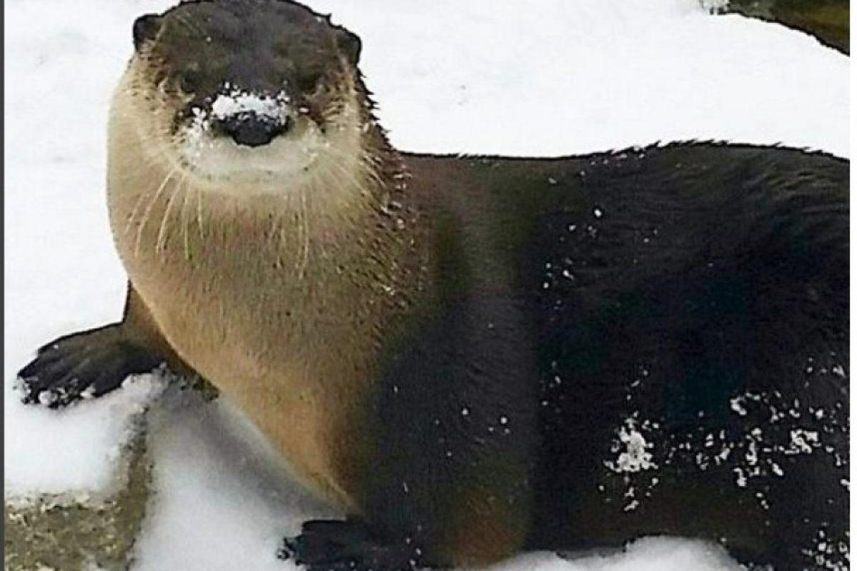 Zoológicos de Estados Unidos anunciaron medidas especiales para el cuidado de sus inquilinos Foto:Instagram.com/cincinnatizoo. Imagen Por: