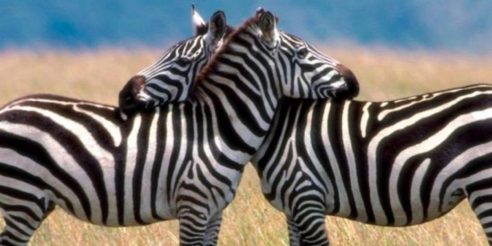 Una mujer africana decidió tener sexo con su socio en los arbustos, precisamente cerca de un león. Este, ni corto ni perezoso, atacó y la mató. Foto:FunnyWallpapers. Imagen Por: