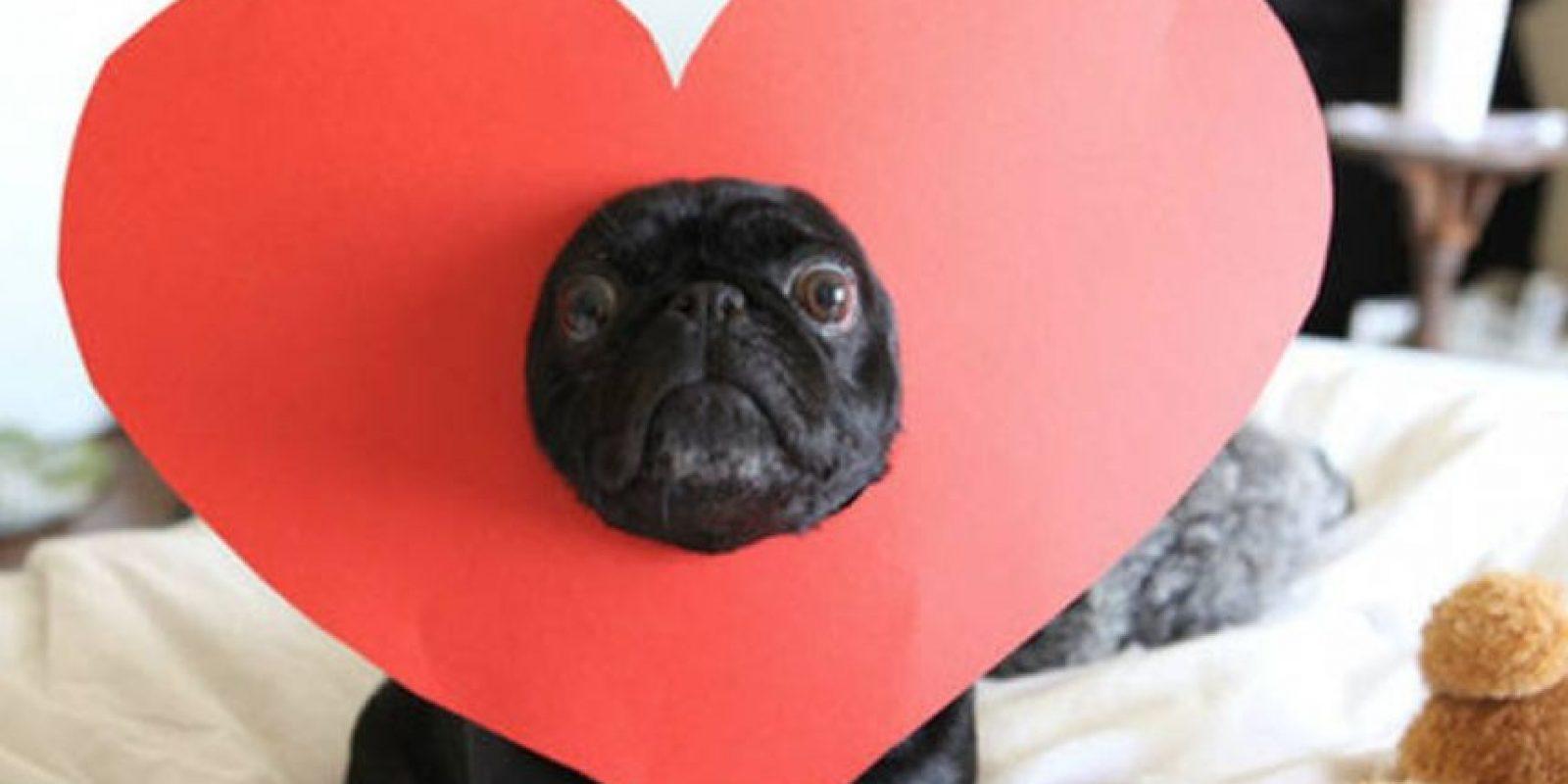 ¿Qué culpa tiene el perro? Foto:Tumblr.com/tagged-amor-cursi. Imagen Por: