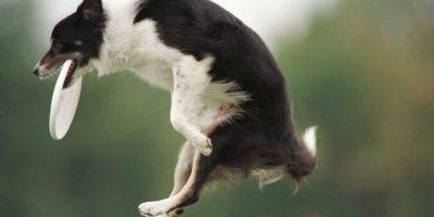 El estudio de IQ puede ser adaptado a otras especies animales Foto:Getty. Imagen Por: