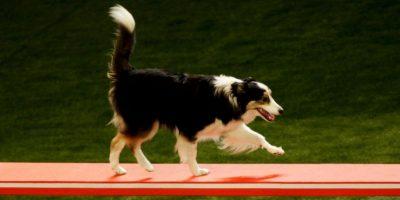 En otra prueba, los perros tuvieron que elegir entre una porción mayor o menor de alimentos Foto:Getty. Imagen Por: