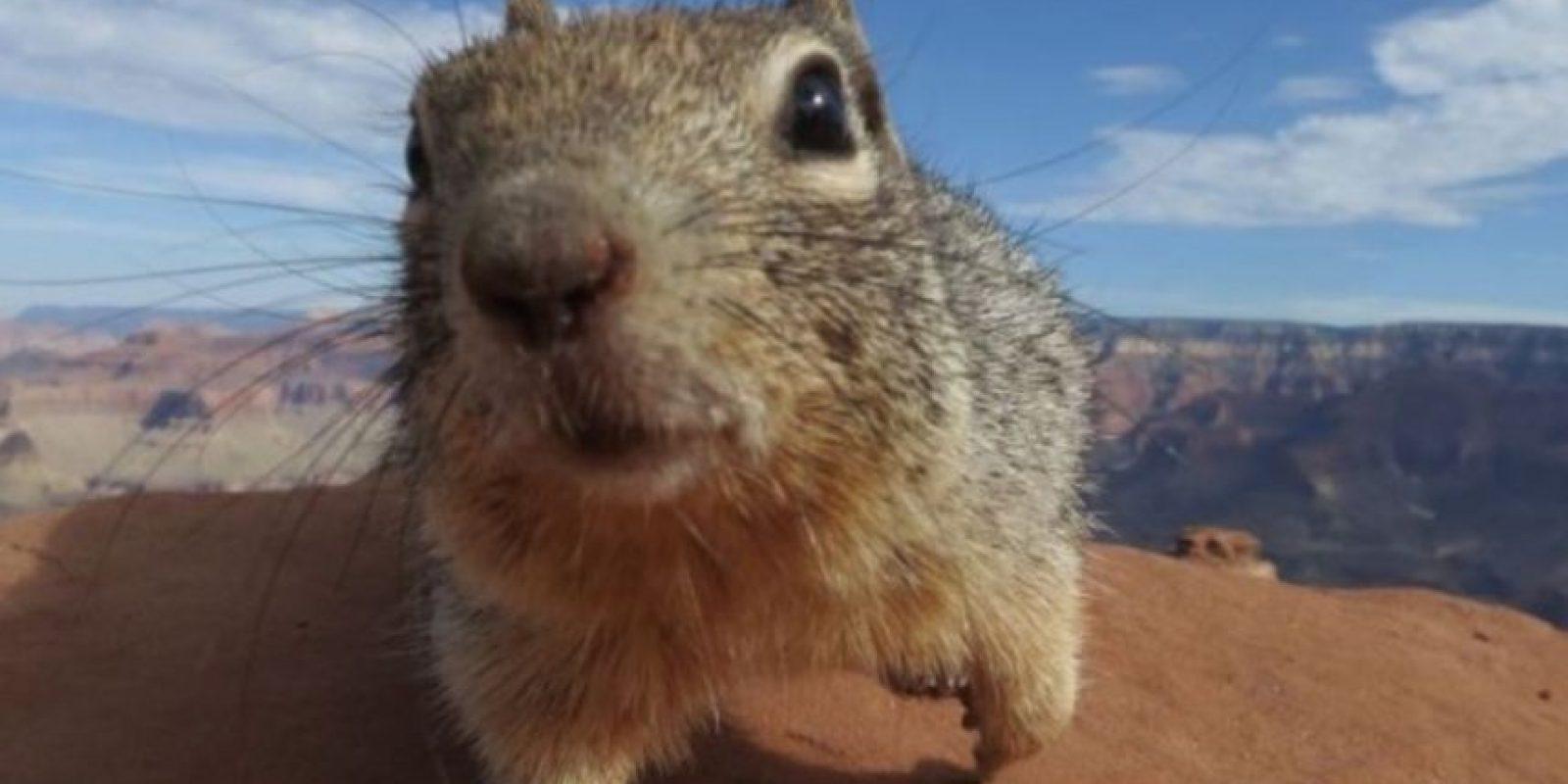 Otros animales que han tenido conflicto con la ley Foto:Getty Images. Imagen Por: