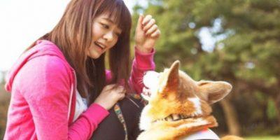 El Inupathy es para perros de 4 a 40 kilos. Foto:Inupathy. Imagen Por: