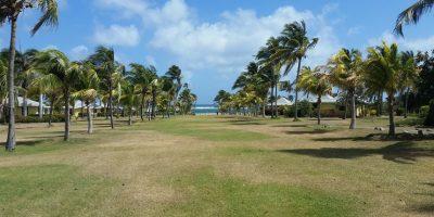 Avenida palmas en Nisbet Plantation Beach Club. Foto:Sonia E. Rivera. Imagen Por:
