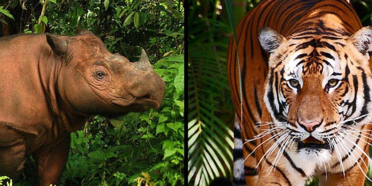 Declaran posible extinción de dos especies de animales