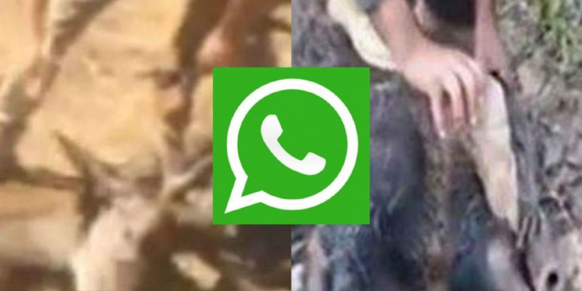 Whatsapp: Detenidos por compartir video de maltrato animal
