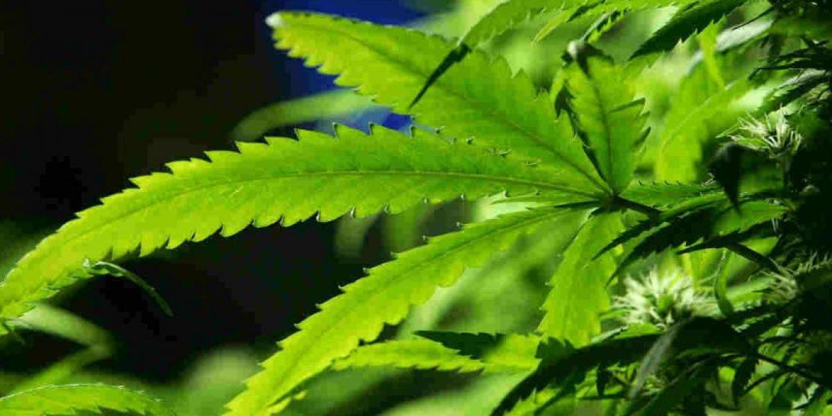 Legal fumar marihuana recreacional en la costa oeste de Estados Unidos