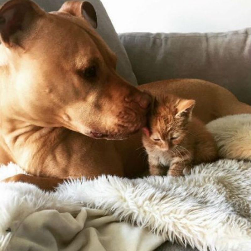 """Los nuevos """"hermanos"""" parecen inseparables. Foto:instagram.com/bubbalovesrue/. Imagen Por:"""