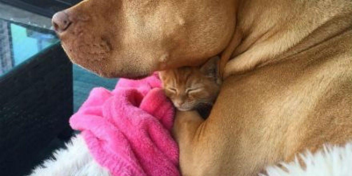 Animales: Este perrito cree que una gatita es su hija