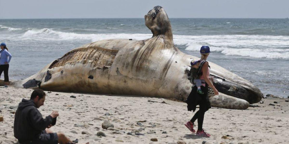 Retiran ballena muerta de famosa playa de California