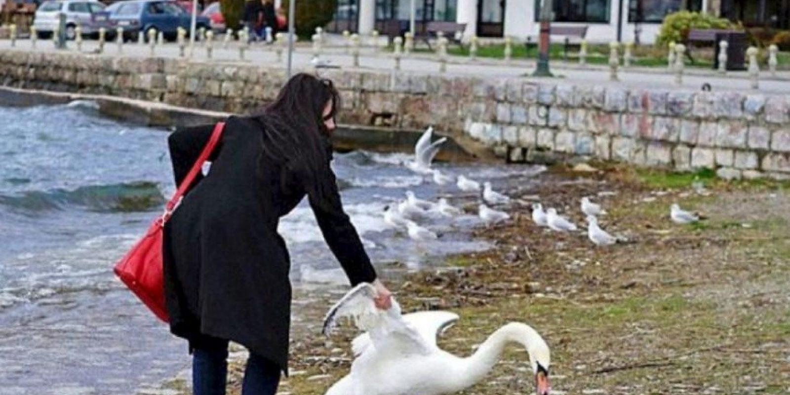 La turista decidió entrar al lago Ohrid, de Macedonia y arrastrar al ave fuera del agua. Foto:Vía Twitter. Imagen Por:
