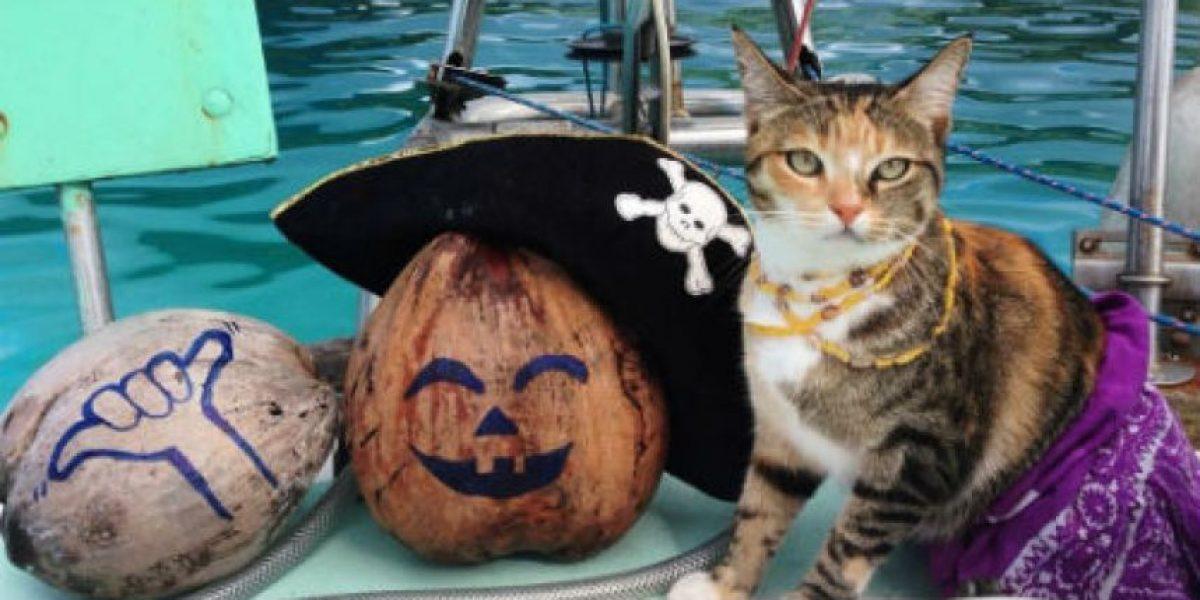 Mujer deja su trabajo y se va a viajar el mundo con su gata