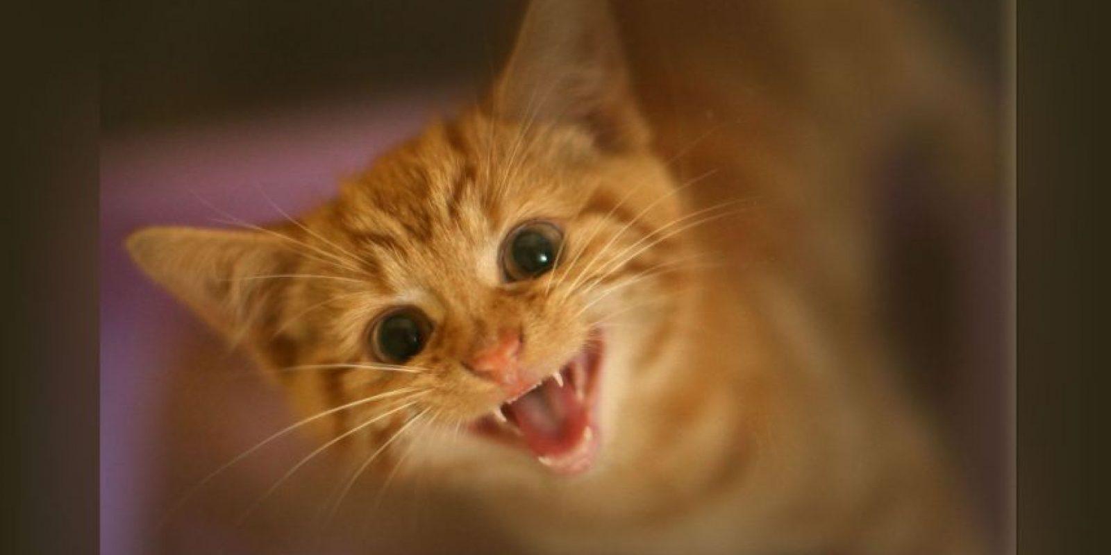 Los gatos cazan aunque no tengan hambre. Foto:Getty Images. Imagen Por: