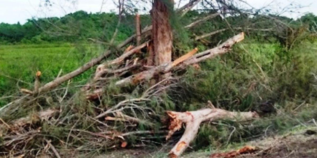 Acusan que Municipio de Loíza taló árboles sin tener permisos