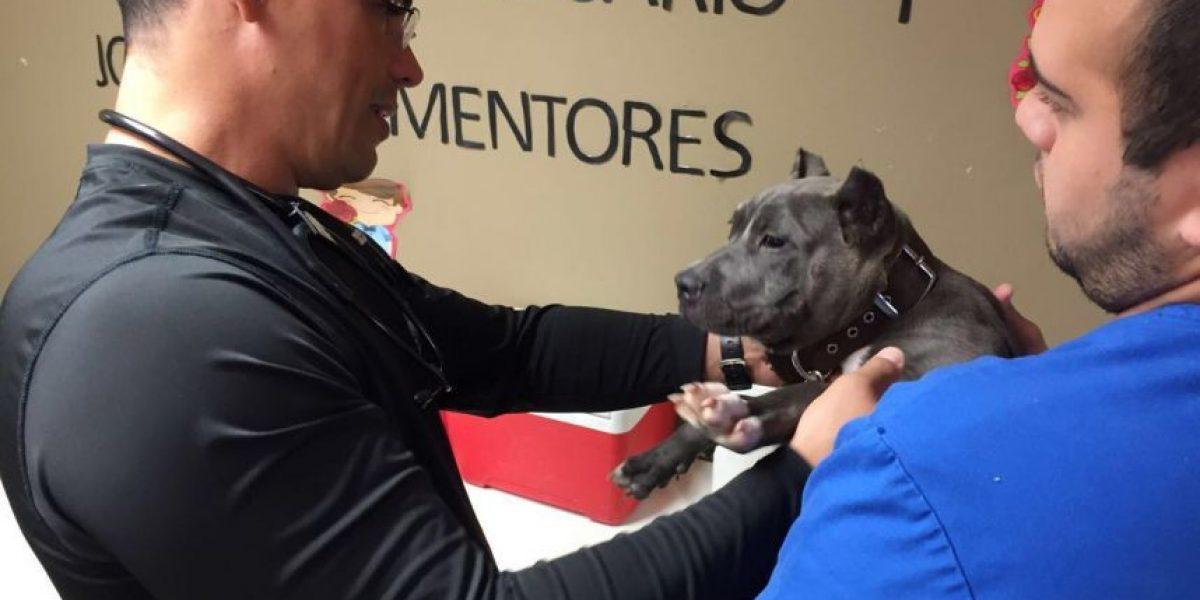 Campaña de vacunación y esterilización de mascotas