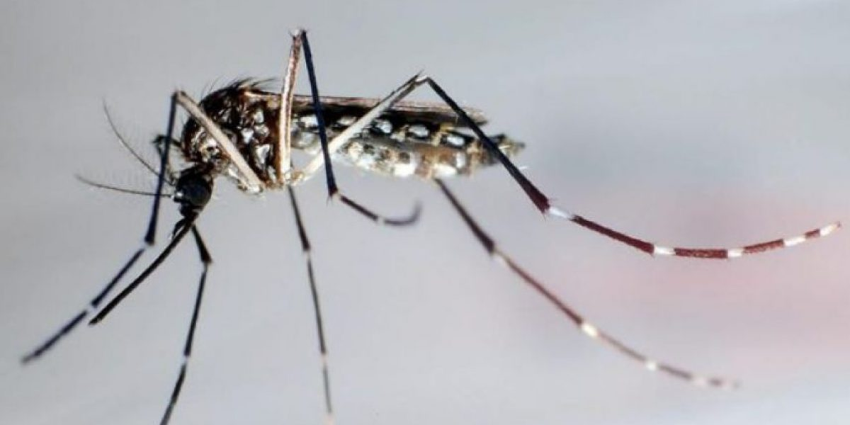 Advertencia sobre el zika en P.R. en aeropuerto de Nueva York