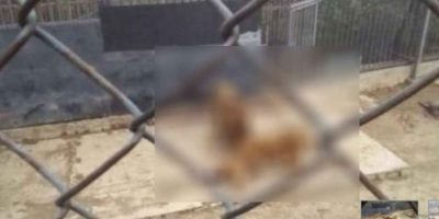 Franco Luis Ferrada, de Chile, trató de matarse lanzándose ante dos leones Foto:vía Youtube. Imagen Por: