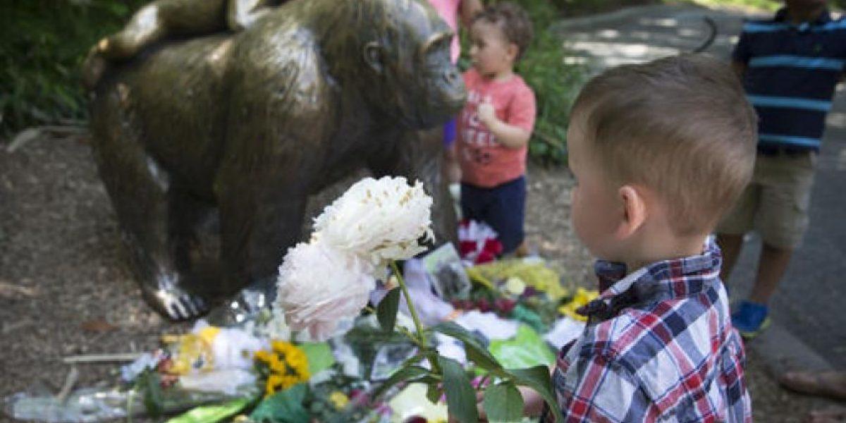 Niño que cayó en jaula de gorila muestra heridas