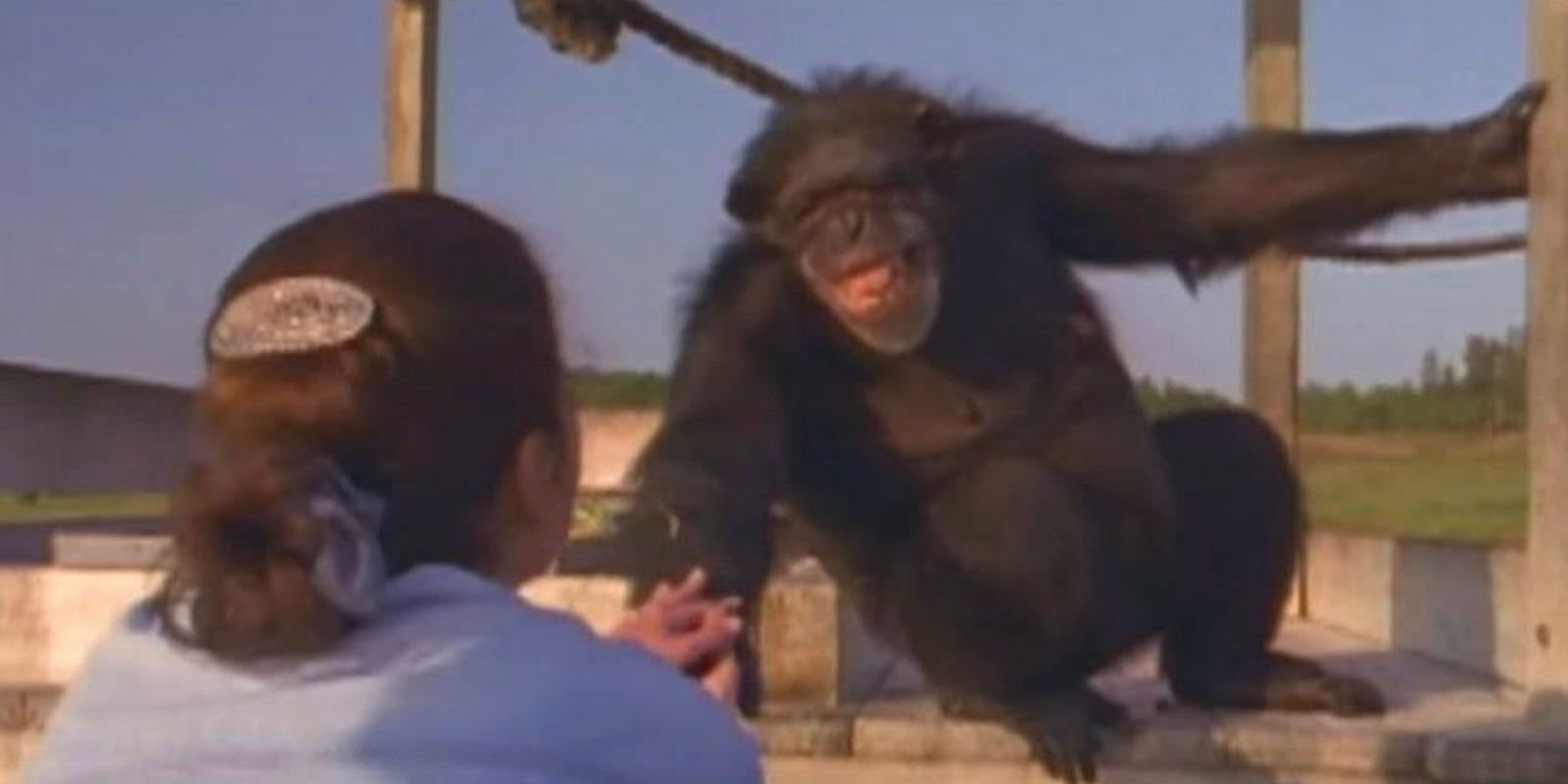 El momento en que un chimpancé le sonríe a quien le salvó hace 25 años se volvió viral, aunque fue grabado hace dos años Foto:PBS. Imagen Por: