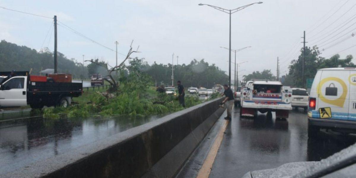 Remueven árbol caído en la número 1 de Caguas a Guaynabo
