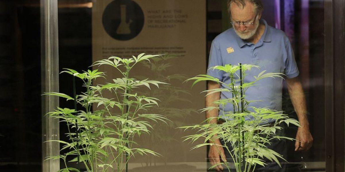 Exhibición sobre marihuana busca crear discusión en California