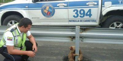 Pero se asustó por el paso de los automóviles y se sostuvo de una barra de protección Foto:facebook.com/ctecuador. Imagen Por: