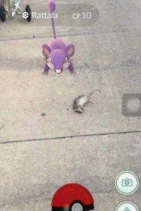 Tratando de proteger a su difunto amigo. Foto:Twitter. Imagen Por:
