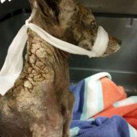 """Este animalito resultó ser un coyote que fue rescatado por """"City of Folsom Animal Services"""". Foto:Vía facebook.com/folsomanimalservices. Imagen Por:"""
