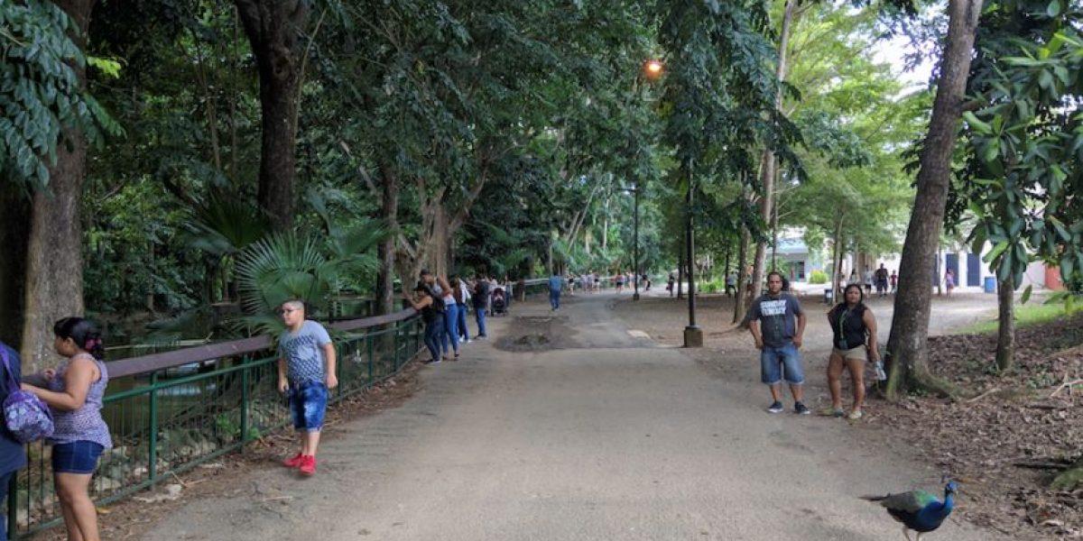 Boricuas y turistas visitan Zoológico de Mayagüez en este fin de semana largo