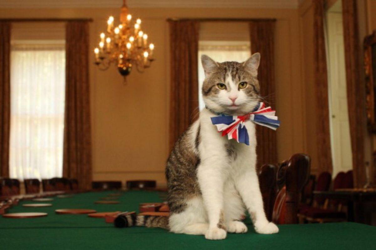 Aspectos básicos del cuidado de un gato Foto:Getty Images. Imagen Por: