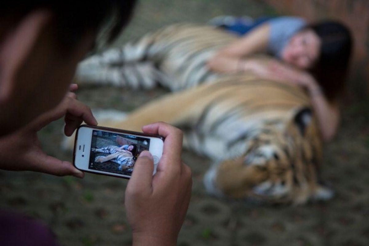 Un estudio realizado en Tailandia demostró el maltrato animal que padecen Foto:Getty Images. Imagen Por: