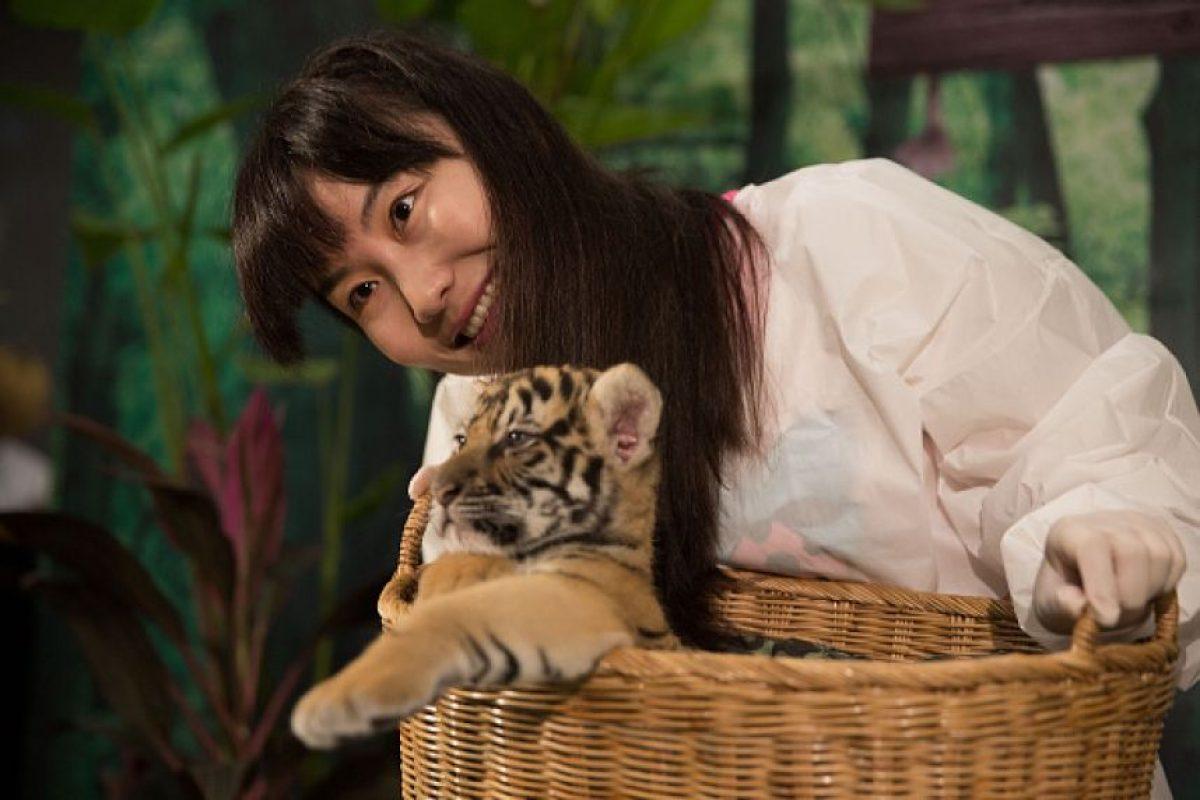 """Organizaciones animalistas denuncian que los felinos son """"víctimas de un turismo irresponsable"""" Foto:Getty Images. Imagen Por:"""
