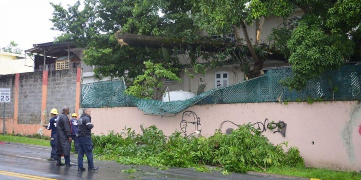 Fotos: Se cae árbol tras efectos de la onda tropical