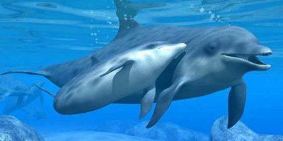 Los delfines también son inteligentes animales que pueden entender a los humanos. Foto:Wikimedia. Imagen Por: